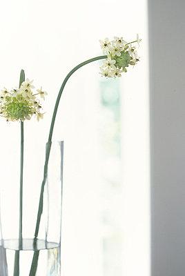 Flower Vase  - p307m660336f by AFLO
