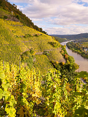 Vineyard and river Moselle - p885m865639 by Oliver Brenneisen