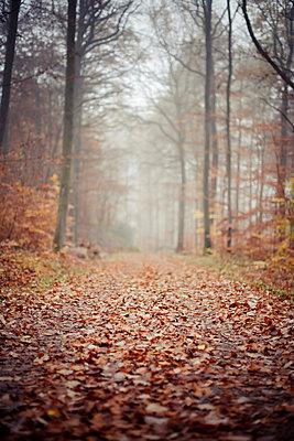 Wald - p9460009 von Maren Becker