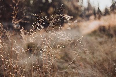 View of dry grass - p312m2208228 by Rania Rönntoft