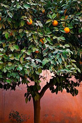 Orange tree in the yard - p382m1171599 by Anna Matzen