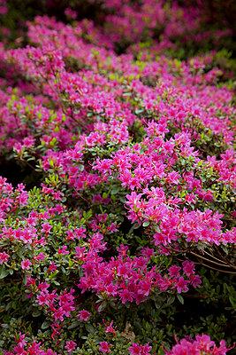 Blumen - p382m919603 von Anna Matzen