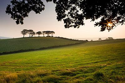Early morning autumn sunshine burns through mist in fields near Luccombe, Exmoor National Park, Somerset, England, United Kingdom, Europe - p8712996 by Adam Burton