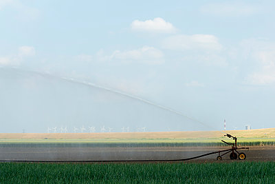 Irrigation on an onion field - p1132m925474 by Mischa Keijser