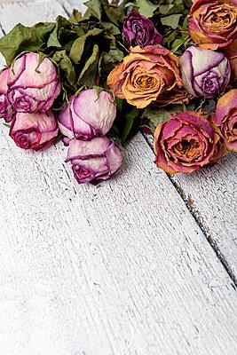Vertrocknete Rosen - p451m972667 von Anja Weber-Decker