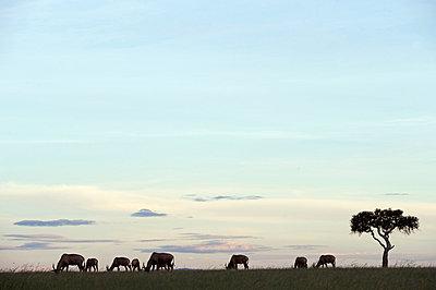 Topi out on the savannah - p6521196 by John Warburton-Lee
