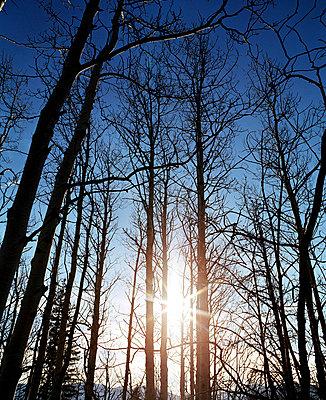 Herbstsonne im Wald - p7800008 von Andrew Geiger