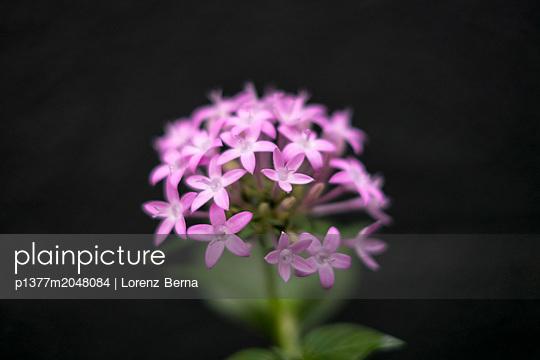 p1377m2048084 von Lorenz Berna