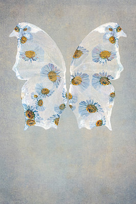 Computer generated abstract pattern of daisy flowers within transparent butterfly wings on light background - p1047m2253662 by Sally Mundy