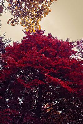 Deciduous trees - p1681m2283429 by Juan Alfonso Solis