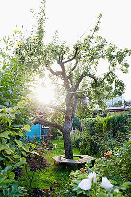 Apfelbaum im Garten - p464m1189734 von Elektrons 08