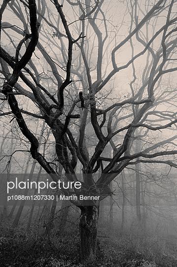 p1088m1207330 by Martin Benner