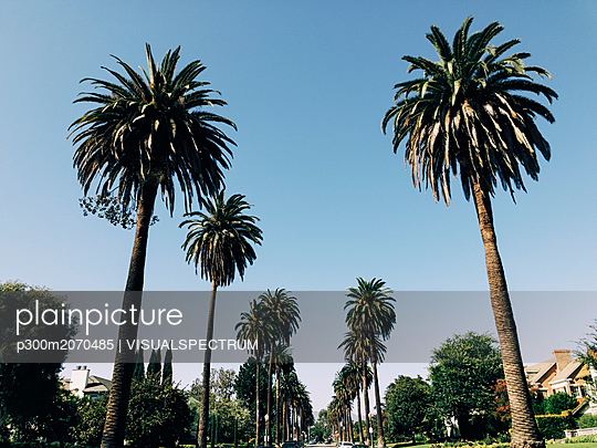 USA, Los Angeles, Palm Trees - p300m2070485 by VISUALSPECTRUM