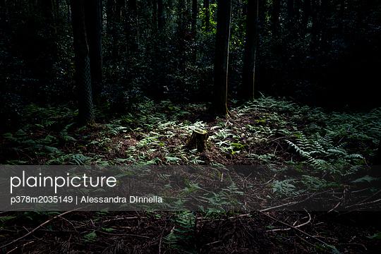 p378m2035149 von Alessandra DInnella