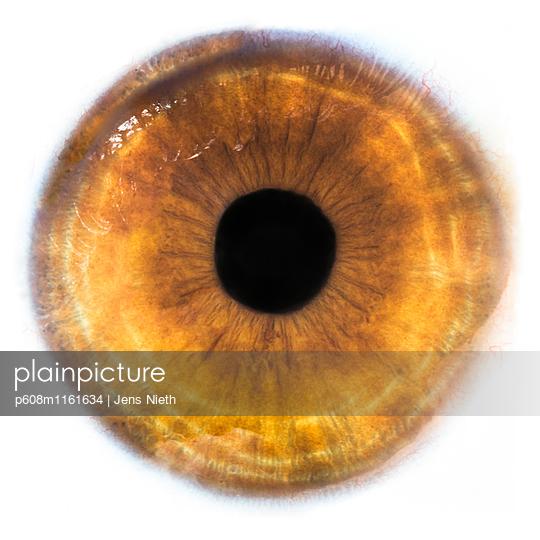 Körper - p608m1161634 von Jens Nieth