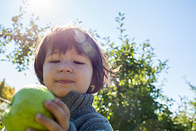 Apple Picking - p535m947671 by Michelle Gibson