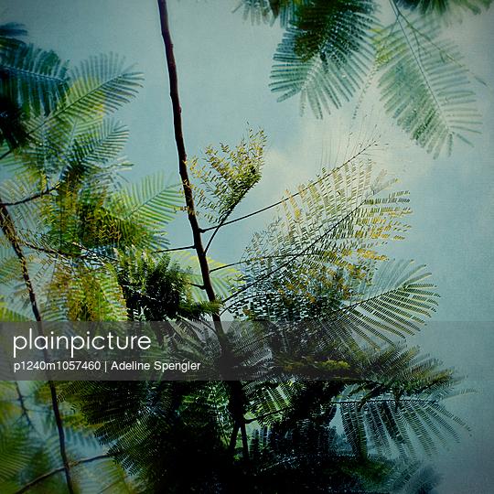 trees - p1240m1057460 by Adeline Spengler