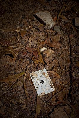 Ace - p627m1035207 by Chris Keller