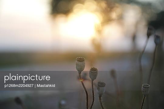 Mohn im Abendlicht - p1268m2204927 von Mastahkid