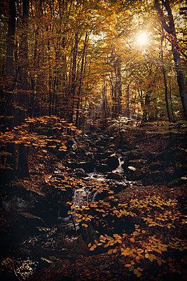Herbstwald - p1432m1496476 von Svetlana Bekyarova