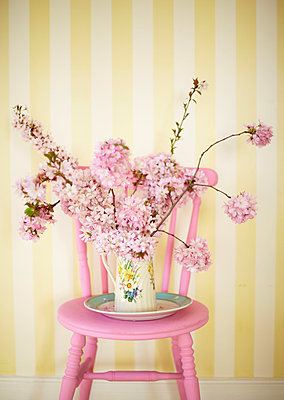 Spring blossom on painted pink chair with striped yellow wallpaper - p349m2167866 by Sussie Bell