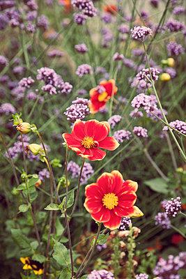 Blumen - p382m894073 von Anna Matzen