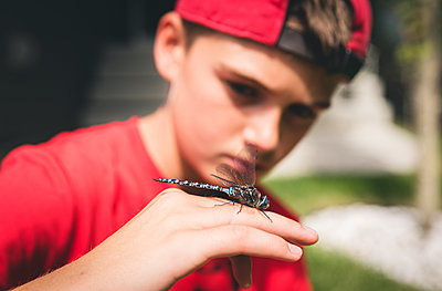Close up of boy examining a dragonfly that he is holding on his hand. - p1166m2137847 by Cavan Images