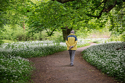 Germany, Ruegen, Putbus, man walking in park with blossoming ramson - p300m2070437 by Maria Maar