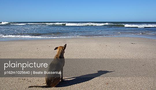 Hund am Meer - p162m1025640 von Beate Bussenius