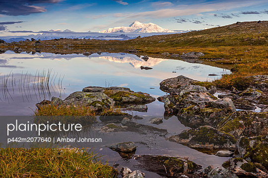 Scenic view of the South side of Denali reflecting in a pond along the Kesugi Ridge Trail, Denali State Park, South-central Alaska; Alaska, United States of America - p442m2077640 by Amber Johnson