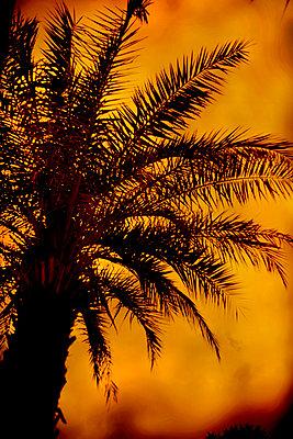 Palmtree - p1028m2275811 by Jean Marmeisse
