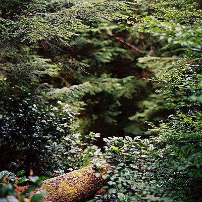 Wald - p1195m1028205 von Kathrin Brunnhofer