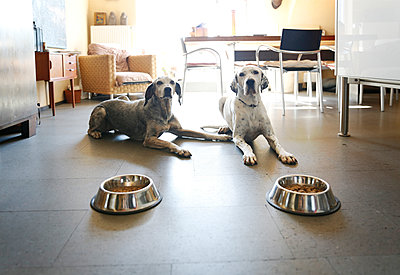 Two dogs at home lying beside bowls - p300m1228405 by realitybites