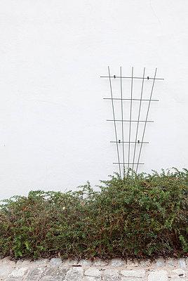 Rankgitter vor Hauswand - p6660102 von Sennaa