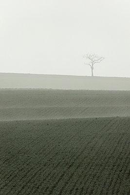 Acker im Nebel - p992m893862 von Carmen Spitznagel