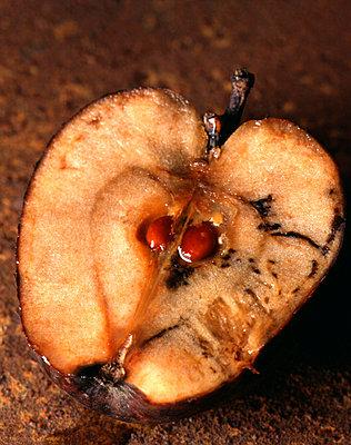 Granatapfel als Symbol der Erloesung von der Suende - p9791873 von Zimmermann photography