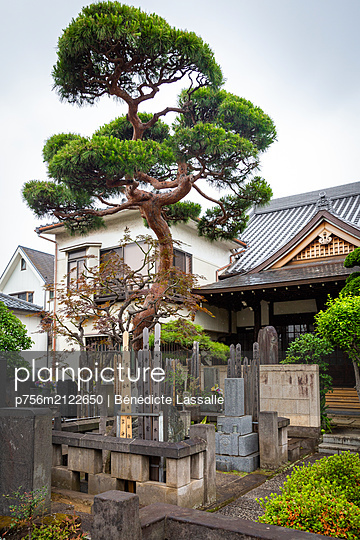 Single tree in a garden in Tokyo - p756m2122650 by Bénédicte Lassalle