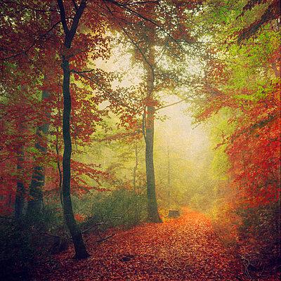 Germany, North Rhine-Westphalia, Wuppertal, Forest track in autumn - p300m926398f by Dirk Wüstenhagen
