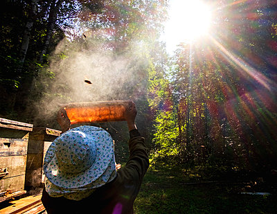 Beekeeper checking beehive against sunlight in farm, Ural, Bashkortostan, Russia - p429m2068992 by Aliyev Alexei Sergeevich