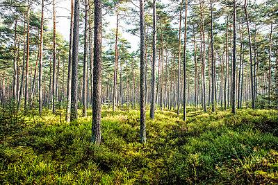 Wald - p947m945792 von Cristopher Civitillo
