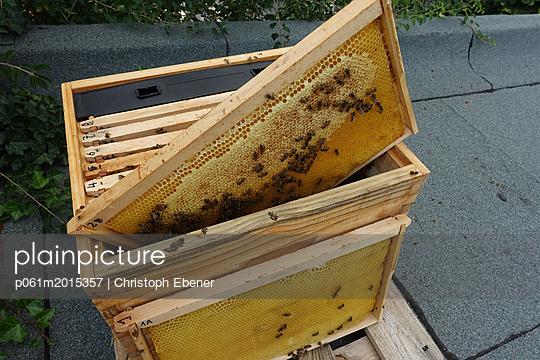 Bienenstock mit Honigwaben - p061m2015357 von Christoph Ebener
