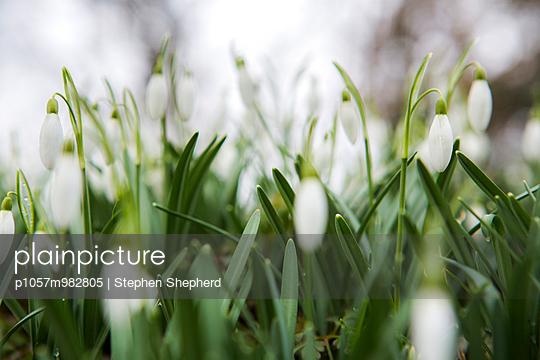 Frühling - p1057m982805 von Stephen Shepherd