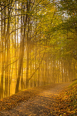 North Downs Way, Dorking, Surrey, England - p651m2006990 by Jon Arnold