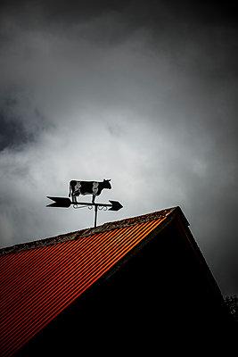 Windfahne Kuh - p248m1462458 von BY