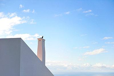Tauben auf einem Schornstein - p949m658749 von Frauke Schumann