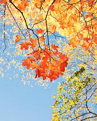 Autumn - p1507m2037866 by Emma Grann