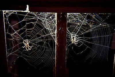Spinnen in der Stadt - p4150740 von Tanja Luther
