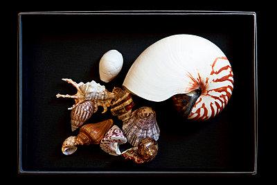 Muschelsammlung - p6370119 von Florian Stern
