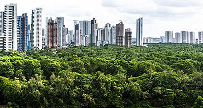 Mangrove forest close to Recife - p1170m1137538 by Bjanka Kadic