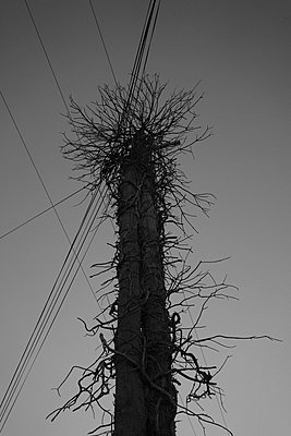 Low angle view of electricity cables over bare tree against clear sky - p301m1534997 by Halfdark